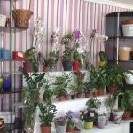 Цветочный бизнес: с чего начать