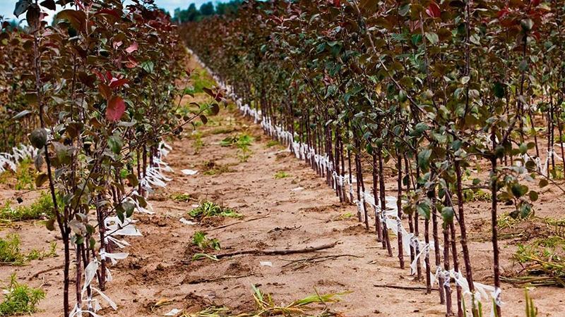 Фермерское хозяйство: выращивание фруктов