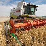 Фермерское хозяйство: выращивание зерна