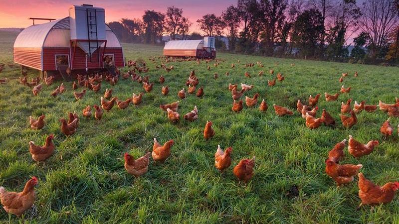 Фермерское хозяйство - птицеводство