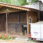 Прилегающая территория гостиницы для животных