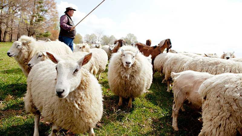 Сотрудники фермерского хозяйства
