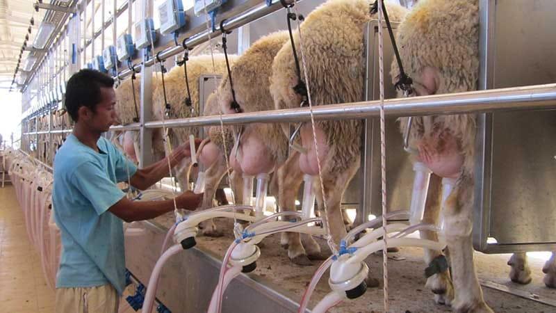Идеи для фермерского хозяйства