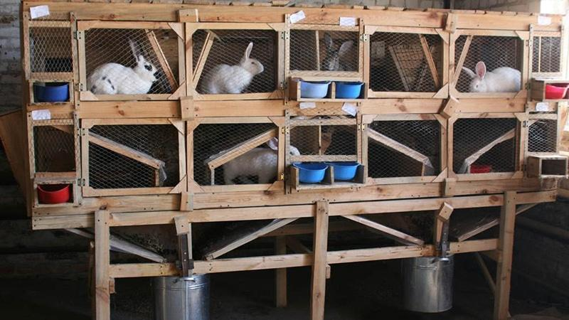 Оснащение фермы кроликов