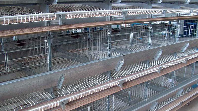 Клеточное оборудование для птицеводства