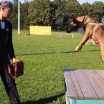 Персонал для открытия питомника собак