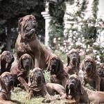 Как открыть свои питомник собак