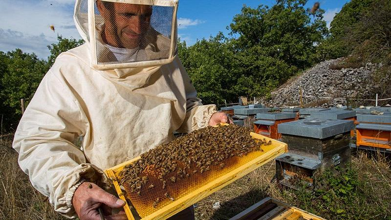 Бизнес идея разведения пчел бизнес идея разведение птицы