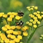 Как развести пчел с нуля