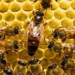 Духматочное содержание пчел