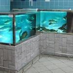 Оборудование для продажи рыбы