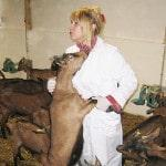 Выращивание коз в домашних условиях