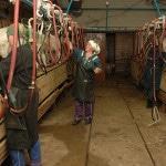 Разведение коз молочной породы