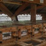 Ферма по выращиванию норок