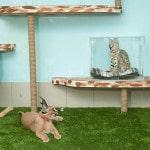 Разведение кошек в домашних условиях