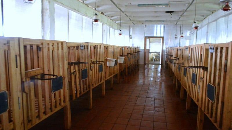 Как построить производственное помещение для разведения курн
