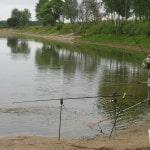 Доходы от бизнеса на рыбе