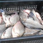 Развод рыбы: выгодно ли