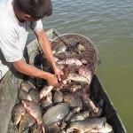 Помощник для разведения рыбы