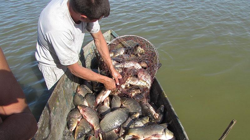 Искусственное разведение рыб что для этого понадобится