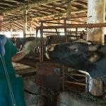 Персонал для разведения коров