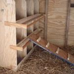 Выращивание в домашних условиях бройлерных цыплят