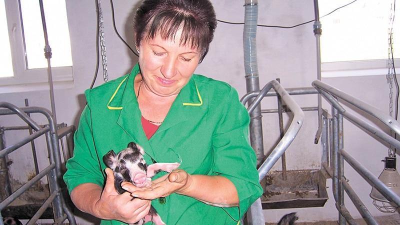 Персонал свиной фермы