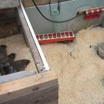 Отзывы о бизнесе на утках в домашних условиях