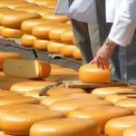 Сыроварня как выгодное производство для малого бизнеса