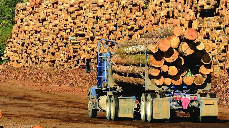 Выгодно ли открыть лесопилку