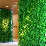 Домашний бизнес для женщин: выращиваем растения