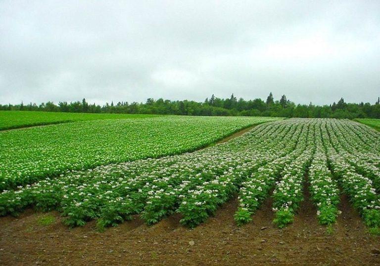 Выращивание урожая 76