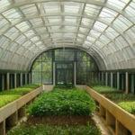 Бизнес на теплице: что выгодно выращивать