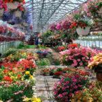 Выращивание цветов: свой бизнес