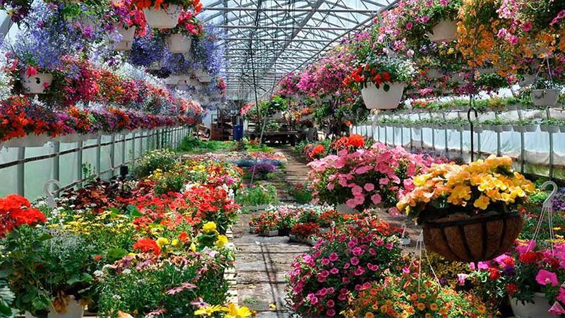 Предприятие по выращиванию цветов 100