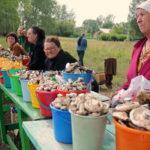 Выращивание грибов как бизнес