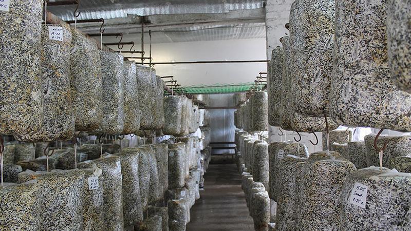Помещение дл выращивания грибов