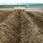 Технология по выращиванию картофеля