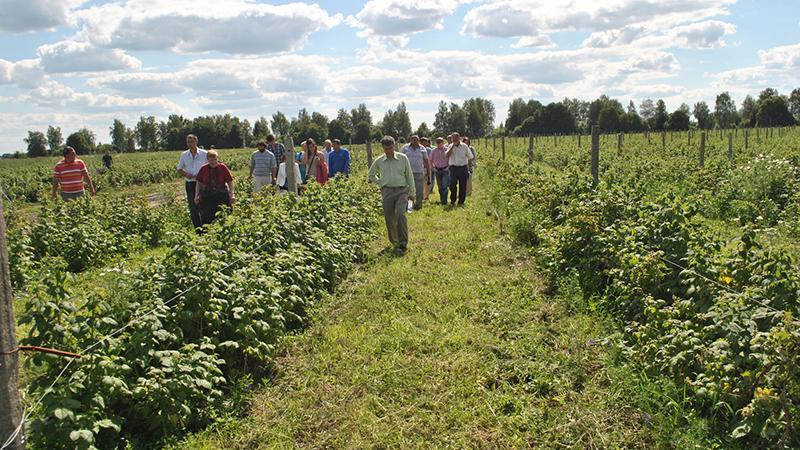 Участок для выращивания малины