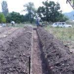 Технология выращивания малины