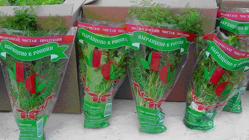 Бизнес на выращивании зелени