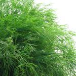 Выгодно ли выращивать зелень в теплице на продажу