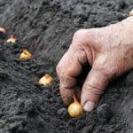 Отзывы о выращивании зелени в домашних условиях