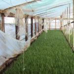 Выращивание зелени в теплице в домашних условиях