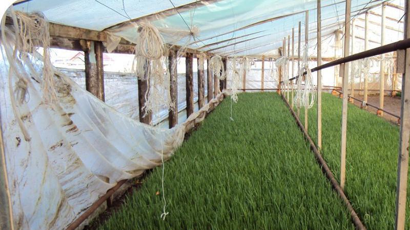 Выращивание зелени в теплицах как бизнес 55