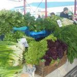 Выращивание лука на зелень: выгодный ли бизнес