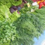 Выращивание зелени в домашних условиях на продажу