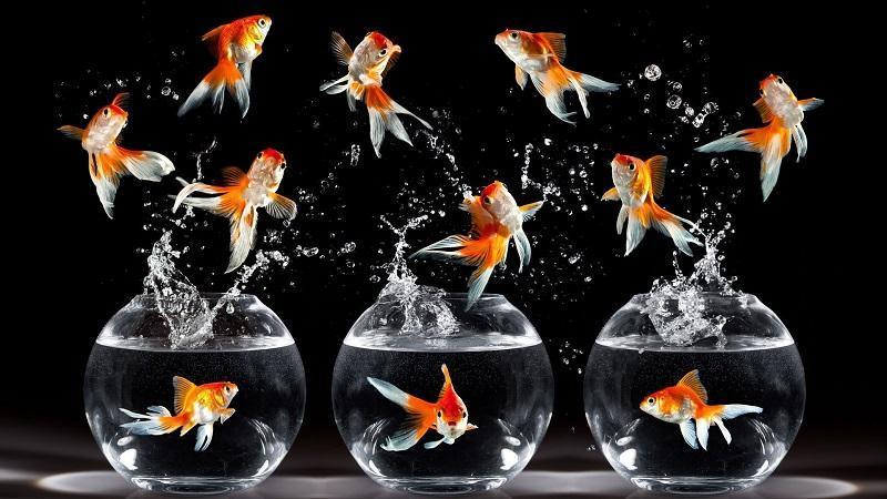 бизнес план по разведению аквариумных рыб