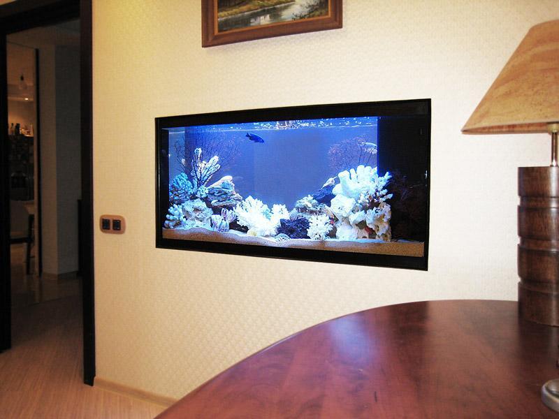 как организовать бизнес на аквариумных рыбках