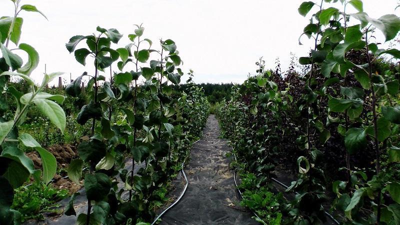 как создать питомник растений организовать с нуля